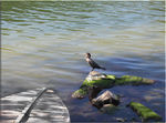 Title: Cormorant watching